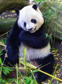 Panda - Google's Algorithm Changes